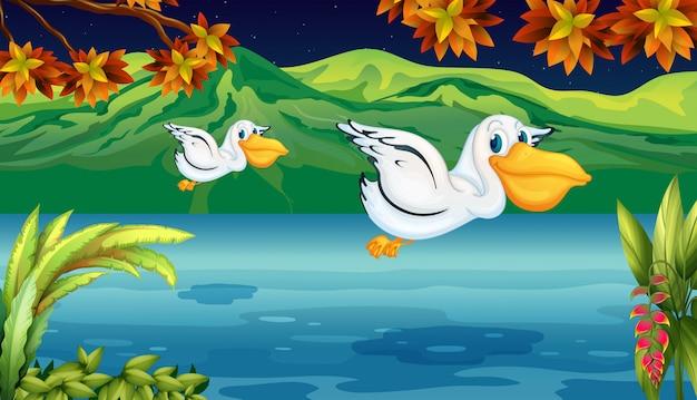 Twee vliegende dieren bij de rivier