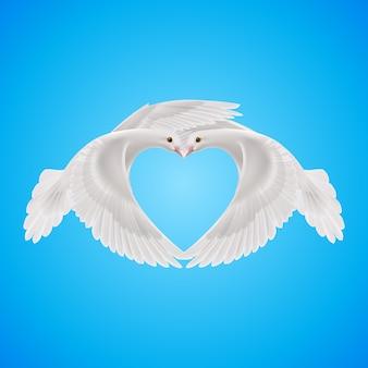 Twee witte duiven vormen de vorm van het hart