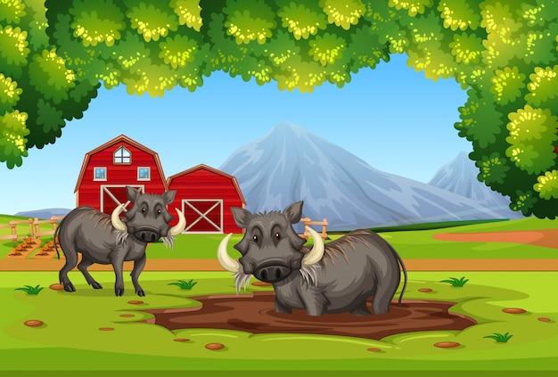 Twee wrattenzwijnen in de natuur