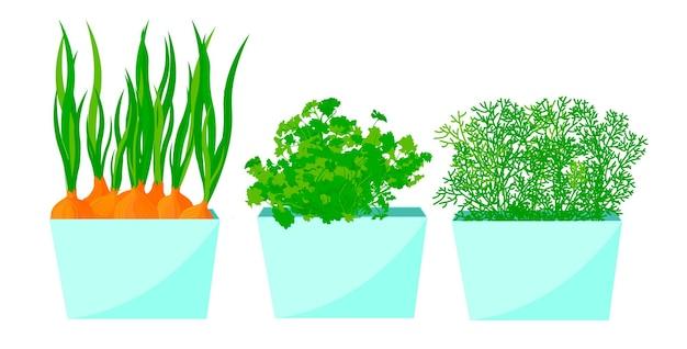 Uien, dille en peterselie groeien in potten op de vensterbank
