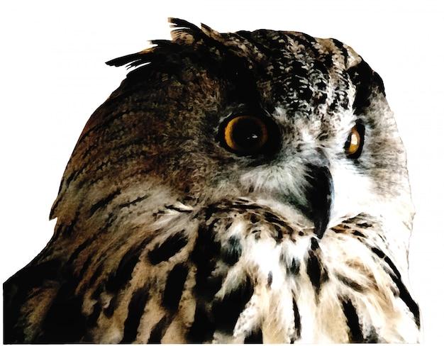Uil met oranje ogenportret