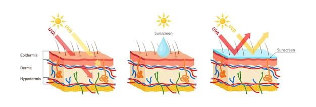 Uv bescherming. zonnebrandlotion beschermt de menselijke huid tegen uva, uvb-stralen