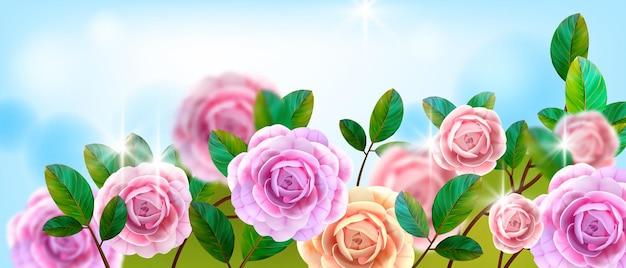 Valentijnsdag bloemen liefde wenskaart, achtergrond met rozenstruiken, roze bloemhoofdjes, groene bladeren.