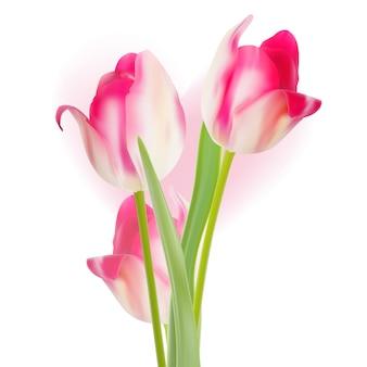 Valentijnsdag sjabloonontwerp tulpen.