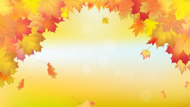 Vallende gouden herfst esdoorn bladeren.