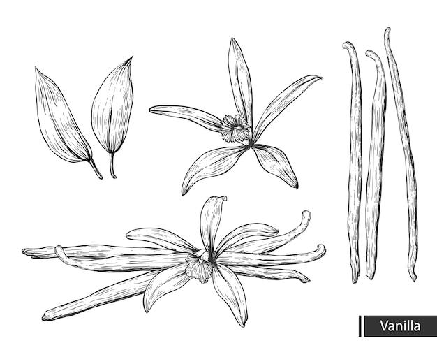 Vanille bloem