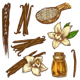 Vanille schets elementen kruiden of specerijen pictogrammen