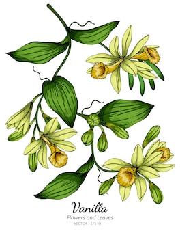 Vanillebloem en bladtekeningillustratie