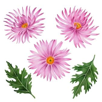Vector asters bloemen illustratie geïsoleerd op een witte achtergrond