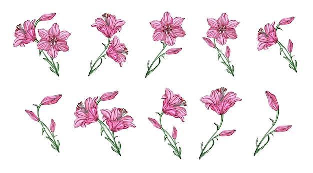Vector bloemstukken met leliebloemen