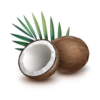 Vector bruine hele en halve kokosnoot met groen palmblad dat op witte achtergrond wordt geïsoleerd