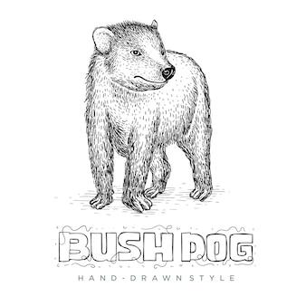 Vector bush dog in hand getrokken stijl. realistische dierenillustraties