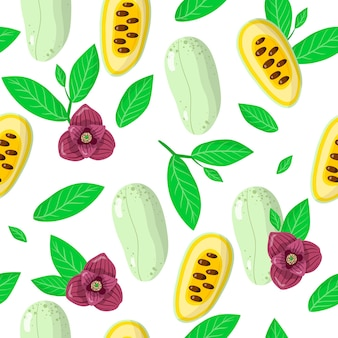 Vector cartoon naadloze patroon met asimina triloba of papaw exotisch fruit, bloemen en bladeren