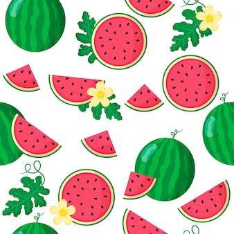 Vector cartoon naadloze patroon met citrullus lanatus of watermeloen exotische vruchten, bloemen en blad op witte achtergrond