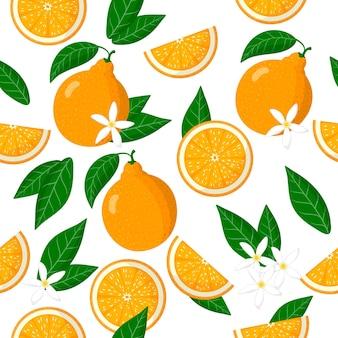 vector cartoon naadloze patroon met citrus tangelo of honeybells exotische vruchten, bloemen en bladeren