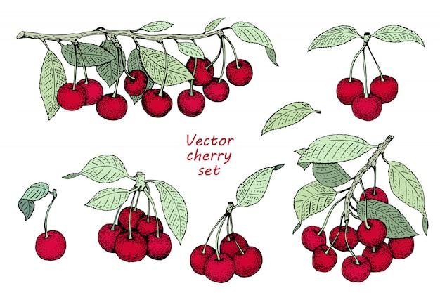 Vector cherry logo sjabloon. kan gebruik voor achtergrond, ontwerp, uitnodiging, banner, dekking zijn. retro hand getrokken illustraties