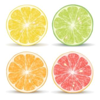 Vector citrusvruchten: sinaasappel, limoen, grapefruit en citroen