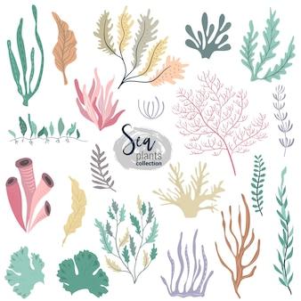 Vector collectie van kleurrijke onderwater oceaan koraalrif planten koralen en anemonen