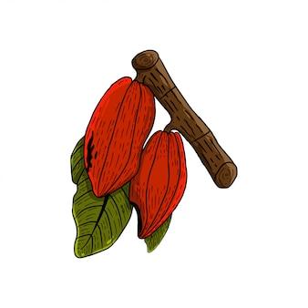 Vector geïsoleerde cacao geïllustreerd op uitstekende stijl