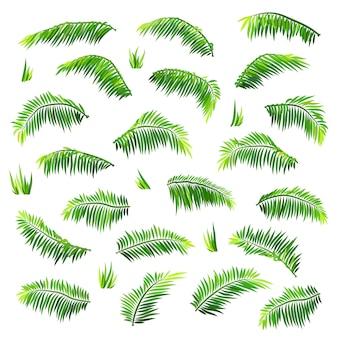 Vector gekleurde palmbladen geplaatst die op wit worden geïsoleerd