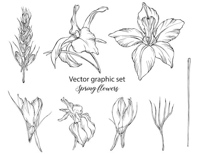Vector grafische set. lente bloemen
