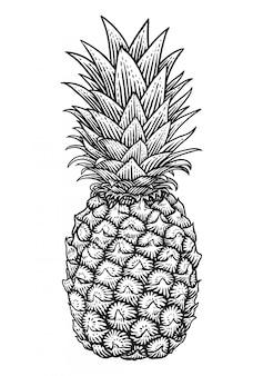 Vector gravure illustratie van ananas op witte achtergrond