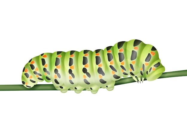 Vector groene machaon rups kruipen op stam close-up zijaanzicht geïsoleerd op een witte achtergrond