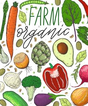 Vector grote reeks groenten in een schetsstijl