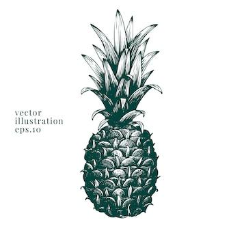 Vector hand getrokken ananas.