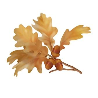 Vector herfst eikenbladeren