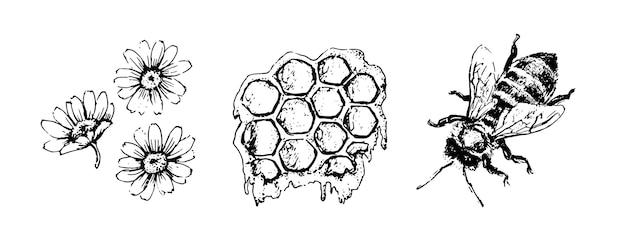 Vector honing instellen. vintage hand getekende illustratie. gegraveerd biologisch voedsel