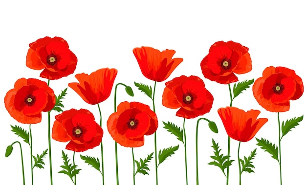 Vector horizontale achtergrond met rode papavers op een witte achtergrond.