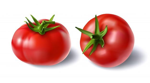 Vector illustratie van een realistische stijl set van rode verse tomaten met groene stammen