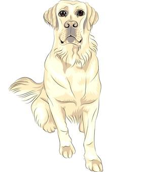 Vector kleur schets hondenras witte labrador retrievers zitten Premium Vector
