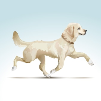 Vector labrador retriever hond
