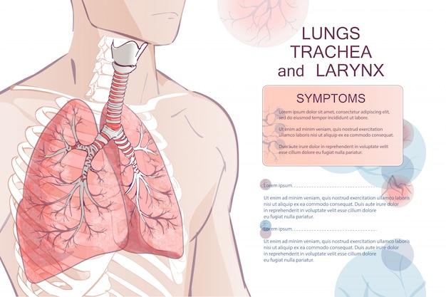 Vector menselijk ademhalingssysteem