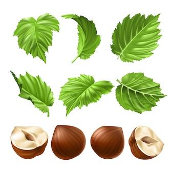 Vector realistische illustratie van een gepelde hazelnoot en groene hazelnootbladeren