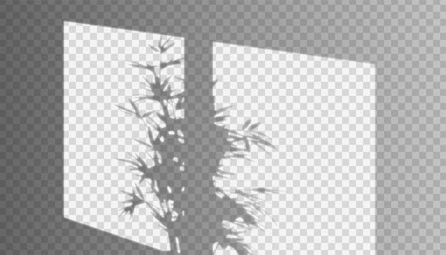 Vector realistische raamschaduw met drieën op de muur op transparant