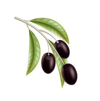Vector realistische zwarte olijven op boom met bladeren.