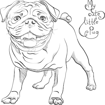 Vector schets schattige zwarte pug hondenras