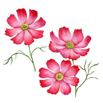 Vector set bloemen bloemen illustratie geïsoleerd op een witte achtergrond