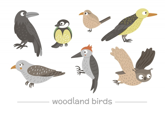 Vector set cartoon stijl hand getrokken plat grappige koekoeken, spechten, uilen, raaf, winterkoninkje. leuke illustratie van bosvogels