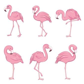 Vector set met vier roze flamingo's geïsoleerd op de witte achtergrond.