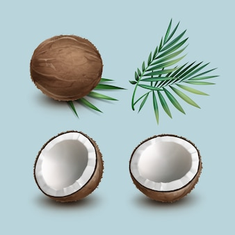 Vector set van bruine hele en halve gesneden kokosnoot met groene palmbladeren geïsoleerd op de achtergrond