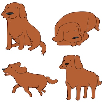 Vector set van hond, golden retriever
