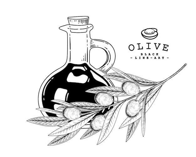 Vector sketch olive decoratieve set.