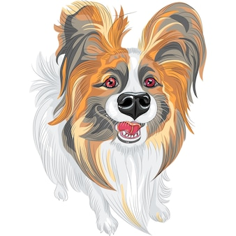 Vector stamboom hond papillon ras