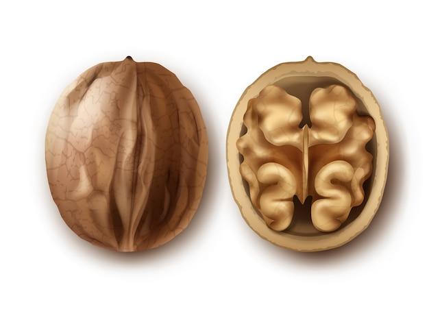 Vector twee hele en gebarsten walnoten close-up zijaanzicht geïsoleerd op een witte achtergrond