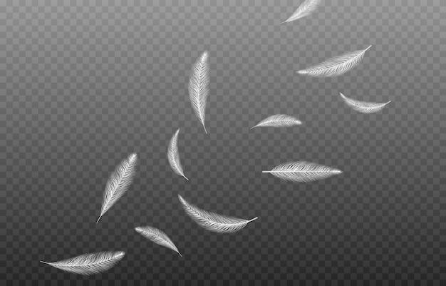 Vector veren op een geïsoleerde transparante achtergrond vallende veren png vliegende veren png