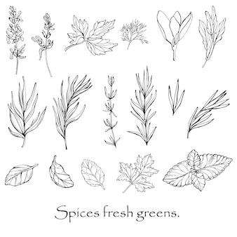 Vector zwart-wit tekening van pittige specerijen.